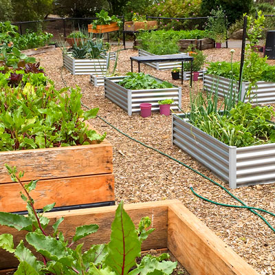 vegetable garden at warrandyte high